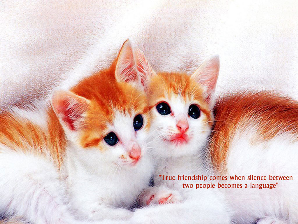 beautiful friendship quotes wallpapers free download