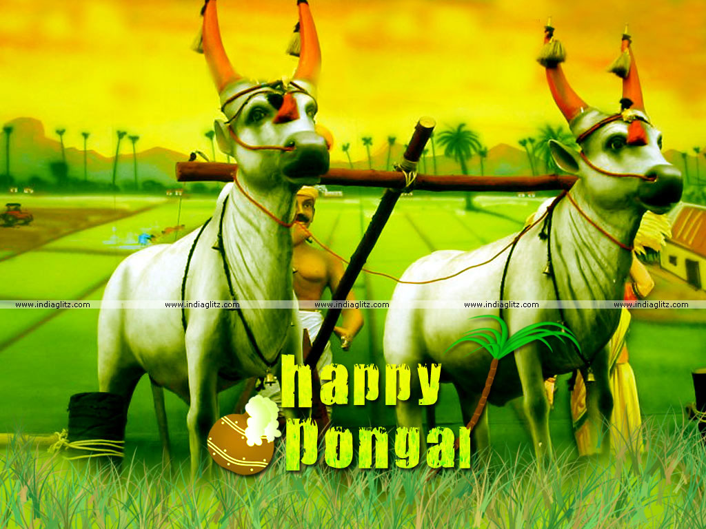 Best Images Of Happy Mattu Pongal Image Collection